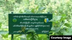 ဆီးယင္းသစ္ေတာႀကိဳး၀ုိင္း (Maung Maung Lwin)