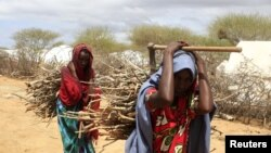 Newly arrived Somali refugee women carry firewood at the Ifo Extension refugee camp in Dadaab, near the Kenya-Somalia border, October 19, 2011.