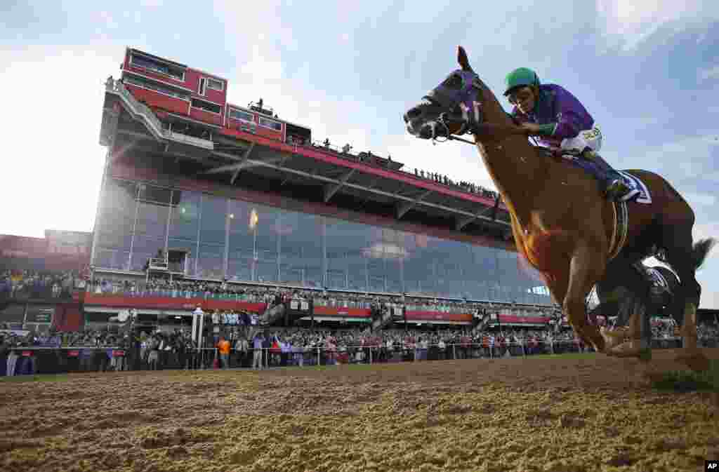 California Chrome, ridden by jockey Victor Espinoza, wins the 139th Preakness Stakes horse race at Pimlico Race Course, Maryland, May 17, 2014.