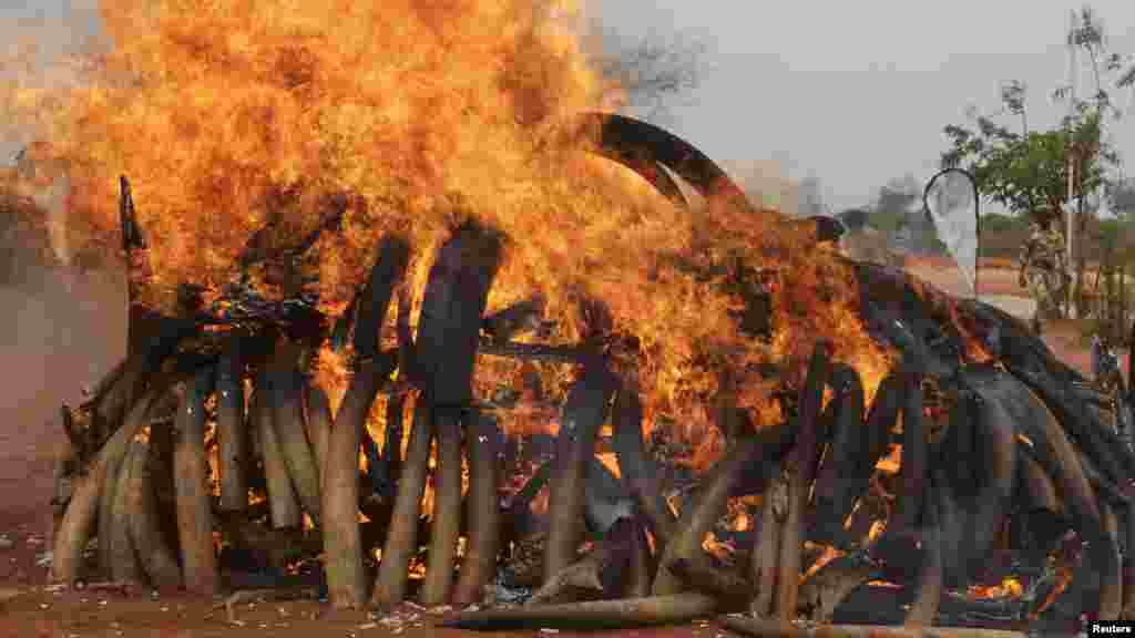 KENYA  Tsavo National Park east of Nairobi burned five tons of ivory in 2011 that were seized from shipments discovered in Singapore and poached from herds in Malawi and Zambia.