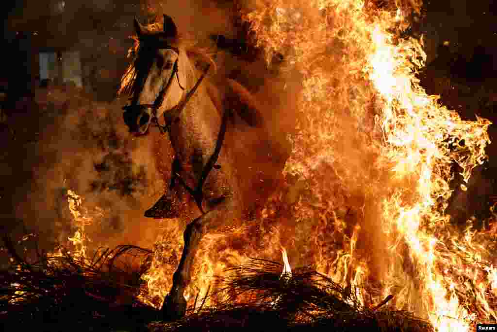 "A man rides a horse through flames during the annual ""Luminarias"" celebration on the eve of Saint Anthony's day - Spain's patron saint of animals - in the village of San Bartolome de Pinares, northwest of Madrid."