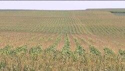 Посуха проти фермерів. Як не збанкрутувати?