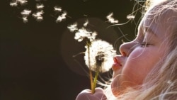 Quiz - Dandelions: One of the Planets Healthiest Foods