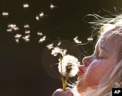 A young girl blows dandelion seeds in the air in a park on a sunny Thursday in 2018. (AP Photo/Michael Probst)