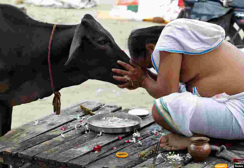 បុរសកាន់សាសនាហិណ្ឌូម្នាក់ធ្វើការបួងសួងទៅកាន់សត្វគោមួយក្បាល បន្ទាប់ពីស្រង់ទឹកនៃតំបន់ Sangam ដែលជាកន្លែងជួបគ្នារវាងទន្លេ Ganga ទន្លេ Yamuna និងទន្លេ Saraswati ក្នុងក្រុង Allahabad ប្រទេសឥណ្ឌា។