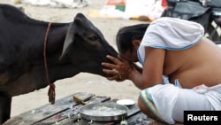 FILE - A Hindu man offers prayers to a cow in Allahabad, India, Sept. 28, 2016.