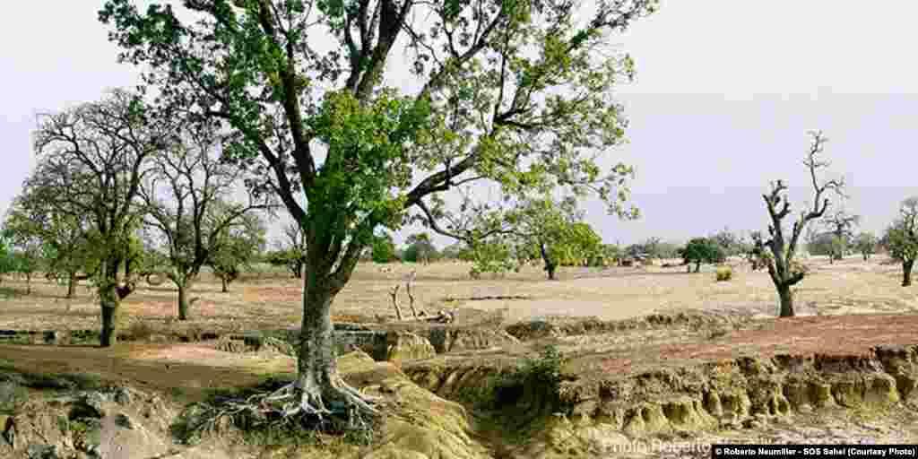 L'érosion hydrique creuse les sols et dénude les racines