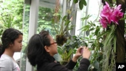 Photographers like Josefina Mateo from California hold up the tourist traffic in the orchid room at the US Botanic Garden.