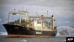 Tàu điều hành bởi Hội Bảo Vệ và Trông Nom Đại Dương, phải, bám sát và chặn đường tàu Nisshin Maru của Nhật Bản, 10/2/2011