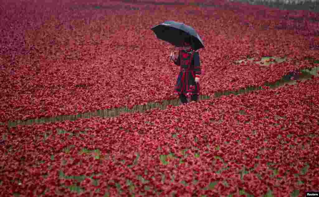 "A Yeoman Warder walks through ceramic poppies that form part of the art installation ""Blood Swept Lands and Seas of Red"" at the Tower of London in London Oct. 29, 2014. Each poppy represents a soldier killed during the WWI."