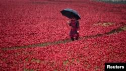Thủ tướng Cameron đi cùng với vợ là bà Samantha, cắm hoa tại Tháp London, nơi có hơn 888.246 cành hoa anh túc bằng sứ.
