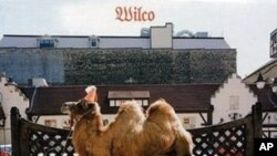 Wilco's 'Wilco (The Album)' CD