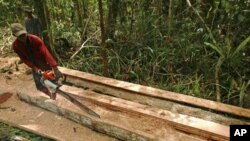 An illegal logger cuts down a tree to be turned into planks for construction in a forest south of Sampit, in Indonesia's Central Kalimantan province, (File)