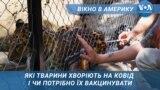 Тварин вакцинують від КОВІД-19