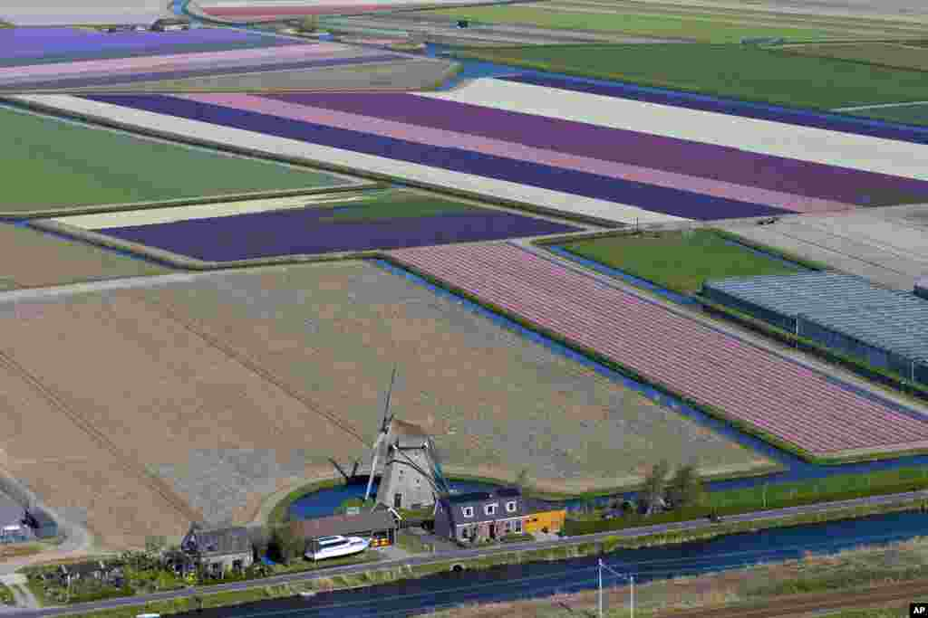 An aerial view shows a windmill and flower fields surrounding Keukenhof Spring Park in Lisse, near Amsterdam, Netherlands.