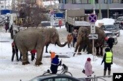 Terlihat 2 gajah sirkus yang lepas dari kandangnya. (Foto: AP)