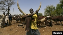 Un homme tient une vache sur le marché de bestiaux de Maiduguri au Nigeria, le 9 mars 2016.