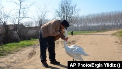 Recep Mirzan, a 63-year-old retired postal worker, shares a moment with Garip, a female swan that he rescued 37 years ago, in Turkey's western Edirne province, bordering Greece, on February 6, 2021. (AP Photo/Ergin Yildiz)