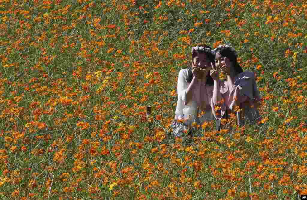 Women pose to take pictures in a field of cosmos flowers at the Olympic Park in Seoul, South Korea.