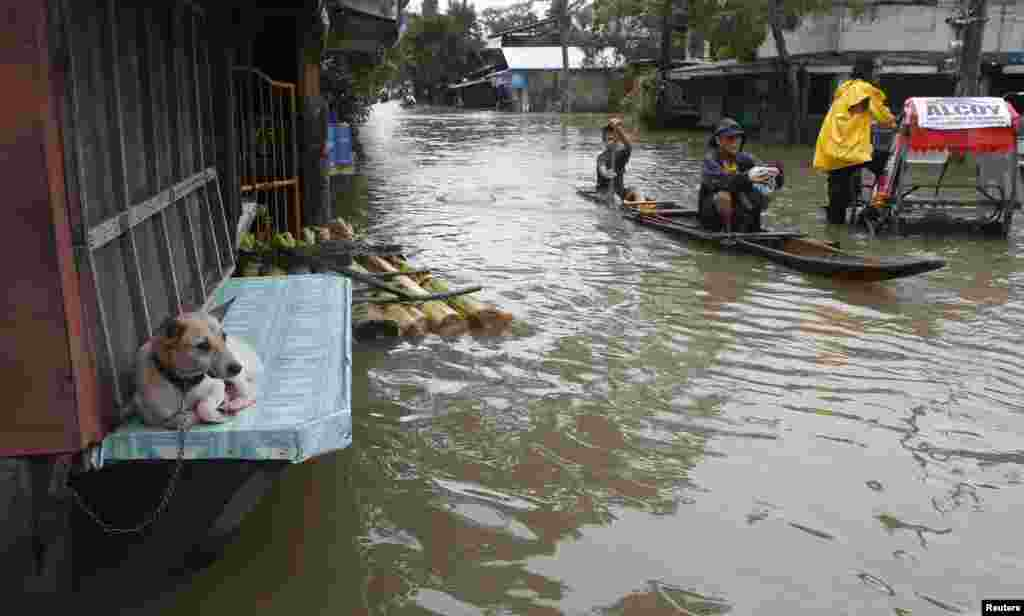 "A dog sits at a closed ""sari-sari"" store (local convenience shop) along a flooded road in Butuan city on the southern Philippine island of Mindanao. The death toll from the floods and landslides caused by a lingering low-pressure area climbed to 34 on Friday, while more than 300,000 people are displaced."