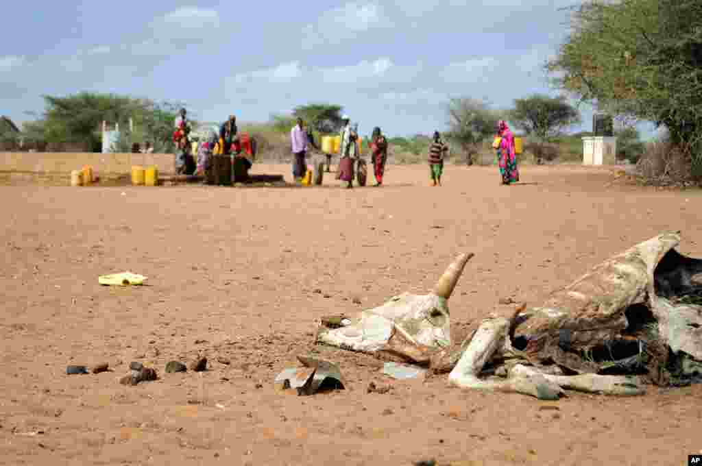 难民们在肯尼亚达达布的达加哈雷营地内取水。