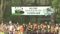 """中國大熊貓""""凱凱""""和""""嘉嘉""""抵達新加坡"""