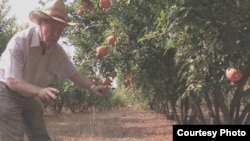Irrigation pioneer Daniel Hillel checks his orchards near his home in Israel