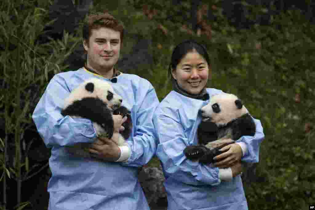 باغ وحشی در بلژیک میزبان دو خرس پاندا از چین به نامهای بائو دی و بائو می است. چین پانداهای تازه متولد شده را به طور موقت به باغوحشهای جهان میفرستد.