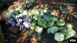 Mocubais no Namibe beneficiarão de apoio á agricultura - 2:49