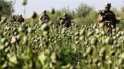 سازمان ملل متحد خواستار راهکاری جهانی برای مبارزه با تولید موادمخدر در افغانستان شد