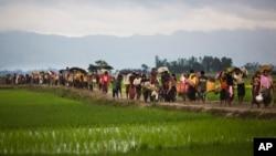 در یک هفتۀ گذشته ۷۳ هزار مسلمان روهینگیایی از برما به بنگله دیش فرار کرده است