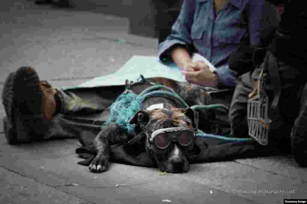 Một con chó và chủ của nó, đều là diễn viên đường phố, nghỉ ngơi sau phần biểu diễn trên con đường chính Karl Johan ở thành phố Oslo, Na Uy, ngày 23 tháng 7, 2015. (Hình: Maung Maung Myint)