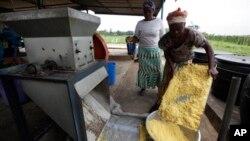 Des agricultrices au Nigeria