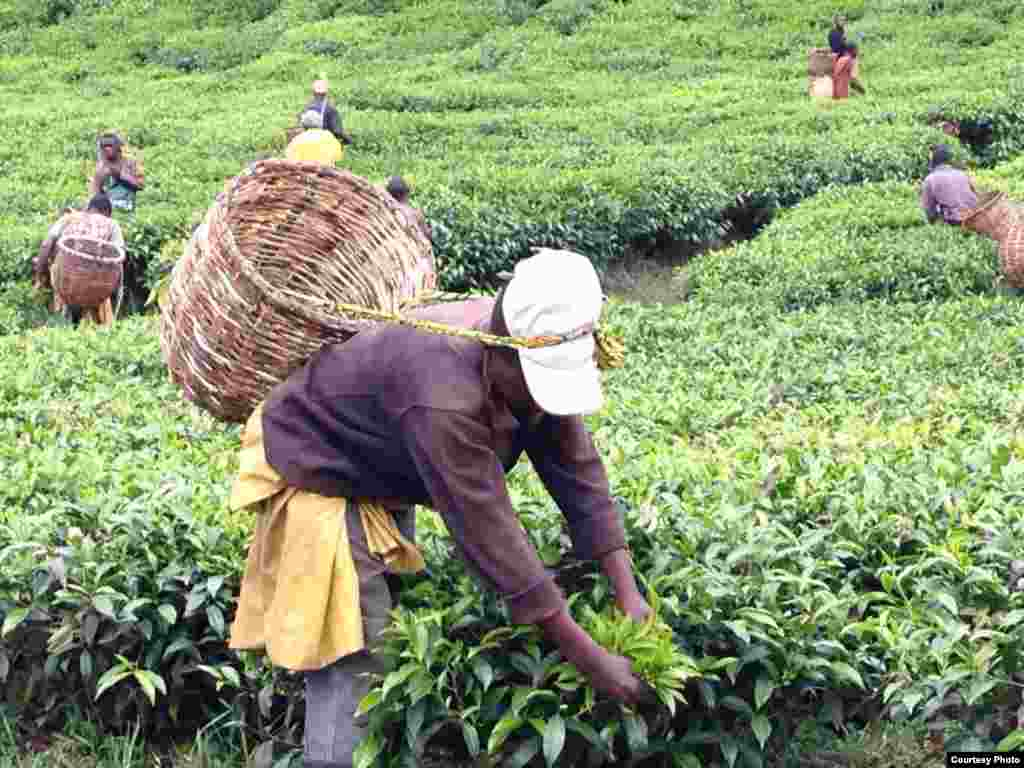 Rwanda Child Labor