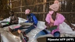 Des saisonniers tamisent des graines séchées d'artemisia, près du village de Faharetana, près d'Antananarivo, le 19 mai 2020. (Photo by RIJASOLO / AFP)