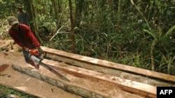 Một người đốn gỗ lậu trong tỉnh Trung Kalimantan ở Indonesia