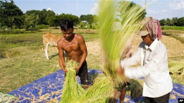 With more than 2.7 million hectares of cultivatable land, agriculture experts hope new methods and seeds can help the country reach a goal of 1 million tons of annual rice export by 2015.