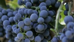 Words and Their Stories: Grapevine