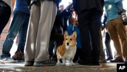 First dog Sutter Brown looks around as his owner California Gov. Jerry Brown talks to reporters after casting his ballot in Sacramento, Calif. Sutter passed away Dec. 30, 2016, at the family ranch in Colusa County, where he was laid to rest.