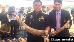 Polisi Thailand menyita gading-gading Afrika yang rencananya diselundupkan ke China (foto: ilustrasi).