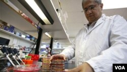 Seorang petugas medis di Jerman melakukan pemeriksaan berbagai sampel makanan yang diduga sebagai sumber E. Coli (7/6).