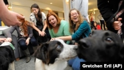 Tufts University students Katie Hagerty, second from right, and Marisa Shapiro of Calabasas, right, take a break from their studies to pet Meika, an Australian Shepherd mix, second from right, and Troy, a chocolate labrador mix, right.