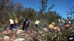 FILE - Workers clear a mountainside of alien plants near Cape Town, South Africa. Non-native plants have spread quickly across the country, bullying and killing local species and sucking up precious water from land that usually supports scrub brush and other less-thirsty varieties.
