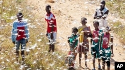 Local youth and children stand in a swarm of locust flying over in Soatana village, southern Madagascar on May 29, 2011.