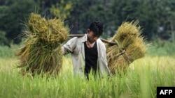Một mặt các chính phủ phải bảo đảm là nông dân có được giá cả thích đáng, mặt khác phải làm sao cho giá rẻ vừa đủ để người tiêu thụ nghèo có thể mua được.