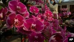 Virus Outbreak Hong Kong Flower Farms