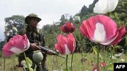 Một binh sĩ Thái tham gia trong chiến dịch hàng năm diệt trừ cây thuốc phiên trong tỉnh Tak, Thái Lan