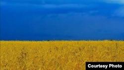Украинское пшеничное поле. Архивное фото.