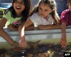 学童触摸海星
