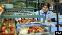 Seorang pekerja mengawasi pengepakan buah apel di Ridgeking Apple Packing, Michigan (7/6)